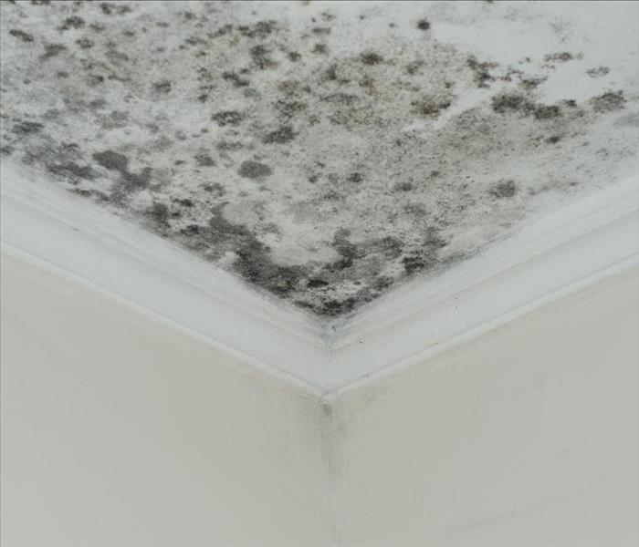mold growing on a ceiling, black