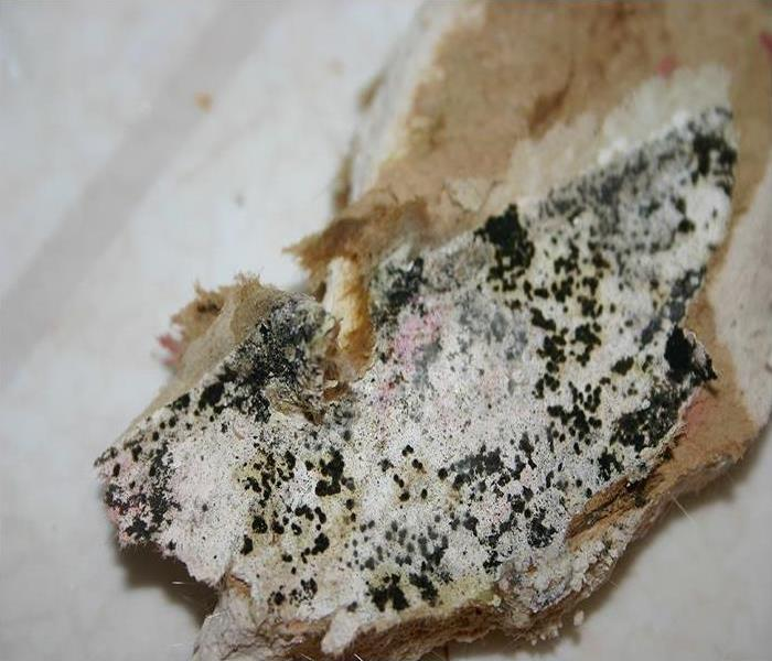Mold Remediation Can Mold Resistant Drywall Stop Mold Damage In San Leandro?
