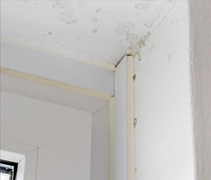 Mold Remediation  Mold Damage Oakland-Homeowners Need Answers