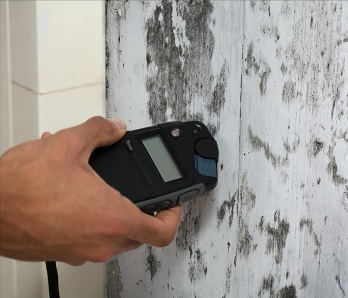 Mold Remediation Why Mold Damage In Your Oakland Home Should Cause Some Concern