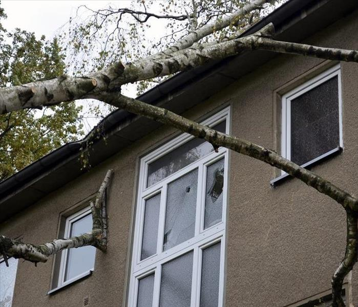 Fallen tree branches damaging roof and window of house