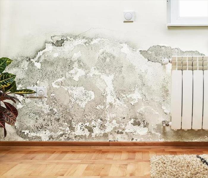 Mold Remediation Mold Damage Cleanup for Your Oakland Home